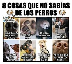 Baby Dogs, Dogs And Puppies, I Love Dogs, Cute Dogs, Animals And Pets, Cute Animals, Mundo Animal, Whippet, Memes