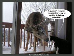 Cat & Reindeer