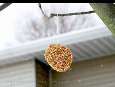 Easy to Make Bird Feeders & Bird Treats