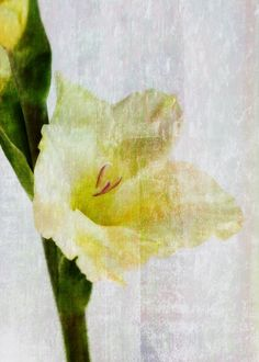 Gladiolus  Swordlilly - JUSTART photograph with texture.  Gladiolus  Swordlilly - JUSTART photograph with texture. Gallery quality print on thick 45cm / 32cm metal plate. Each Displate print verified by the Production Master. Signature and hologram added to the back of each plate for added authenticity & collectors value. Magnetic mounting system included.  EUR 44.00  Meer informatie