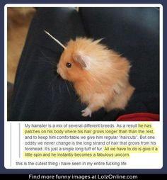 Unicorn hamster...