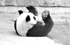 Cute Cute Cute Panda #Panda