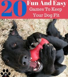 Playing with your dog is almost always a fun time. Whether you're throwing a ball, or just having a game of tug of war, you're keeping your dog active. But what else can you be doing to keep them in shape mentally and physically? We've compiled a list of Dog Information, Dog Games, Labrador, Dog Activities, Dog Training Tips, Crate Training, Dog Life, Dog Toys, Animals And Pets