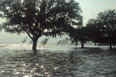 Hurricane flooding on the lakefront