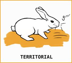 A rabbit might attack if they are scared, or they are protecting their territory. They might als act out if they are stressed or bored. Rabbit Run, Silly Rabbit, Pet Rabbit, Pet Bunny Rabbits, Bunnies, Bunny Care Tips, Rabbit Facts, Rabbit Behavior, Female Rabbit