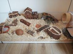 Hamster Bin Cage, Gerbil Cages, Hamster Food, Hamster Life, Hamster Habitat, Hamster Stuff, Baby Hamster, Hamster House, Baby Hedgehog