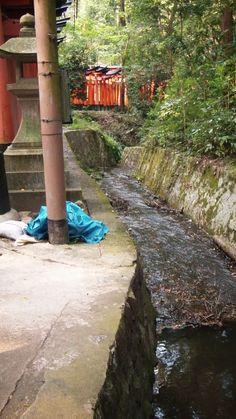 A tiny stream running through Fushimi-Inari.