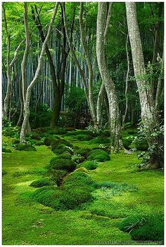 Moss garden in Giyo-ji temple (祇王寺) I just want this to be my backyard. Moss garden in Giyo-ji te Beautiful World, Beautiful Gardens, Beautiful Places, Beautiful Beautiful, Shade Garden, Garden Landscaping, Fence Garden, Garden Sofa, Garden Park