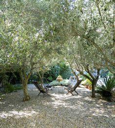 aménagement jardin méditerranéen avec des oliviers et chaises de jardin en bois