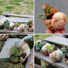 The 35 Most Creative DIY Planters | Brit + Co. The miniature shell garden planter