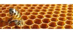 #Propóleos. Es una sustancia que obtienen las abejas de las yemas de los árboles y que luego procesan en la colmena convirtiéndola en un potente antibiótico con el que cubren las paredes de la colmena, con el fin de combatir bacterias, virus y hongos que puedan afectarla. El propóleo tiene materias colorantes que son muy activas en la función antiséptica. Además contiene resinas (secreción orgánica que producen muchas plantas) y bálsamos... | TeQuieroBio.com