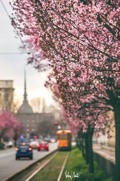 Primavera a Torino foto di Valerio Minato #torino #spring #italy