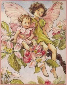 Illustration for the Apple Blossom Fairy from Flower Fairies of the Alphabet - author / illustrator Cicely Mary Barker Cicely Mary Barker, Flower Fairies, Elfen Fantasy, Fairy Pictures, Fairy Coloring, Vintage Fairies, Fantasy Illustration, Fairy Art, Illustrators