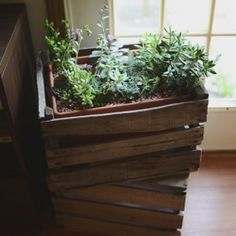 Want to spruce up your potted plants? Use old wooden crates to contain your sweet indoor garden. Check out Violet's crated succulents!