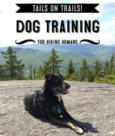 Trips and tricks for getting your dog ready for hiking, backpacking, and your next adventure!