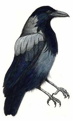 Crow in ink and watercolor