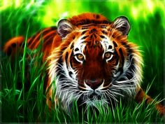 wallpaper for computer | Description: Tiger Wallpaper is Wallapers for pc desktop,laptop or ...