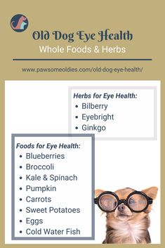 Use these herbs and supplements to enhance old dogs' eye health. Also grab a simple recipe for dog eye health from this post. Use these herbs and supplements to enhance old dogs' eye health. Also grab a simple recipe for dog eye health from this post. Dog Treat Recipes, Dog Food Recipes, Healthy Recipes, Dogs Eyes Problems, Food For Eyes, Diy Pet, Dog Nutrition, Dog Care Tips, Pet Care