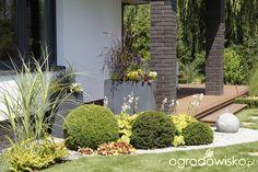 Ogród z lustrem - strona 234 - Forum ogrodnicze - Ogrodowisko