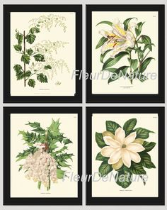 BOTANICAL Print SET of 4 Art Prints 8x10 Wendel Beautiful White Large Magnolia Lily Grape Fruit Spring Summer Garden Antique Wall Home Decor
