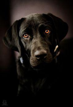 I miss my dog terribly                                                                                                                                                                                 Plus