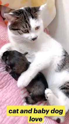 cat and baby dog love