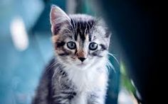 Image result for cute kitty wallpaper