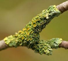 15. Lichen - photography by Umberto Salvagnin #modcloth#makeitwork