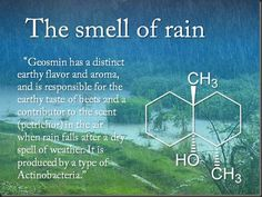 What Is That Rainy Day Smell? We find that Phaedon's Coton Egyptien and Jardin du Poete by Eau d'Italie have a certain wet vegetation smell. by gale Earth Science, Science And Nature, The More You Know, Good To Know, Smell Of Rain, Cultura General, Science Facts, Science Quotes, Kid Science