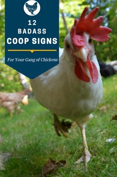 You know what your gang of chickens deserves? A badass coop! We've picked out a dozen chicken coop signs to help you snazz up the place. Or, you know, give your chickens something to poop on. Chicken Names, Cute Chicken Coops, Chicken Coop Decor, Chicken Coop Signs, Diy Chicken Coop Plans, Chicken Coup, Best Chicken Coop, Chicken Humor, Backyard Chicken Coops