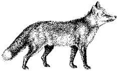 Fox Clipart Black And White
