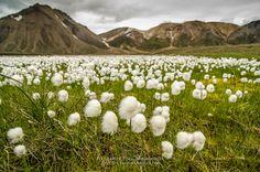 Landmannalaugar, El viaje al centro de la tierra – Chavinandez-Fotografía de viajes