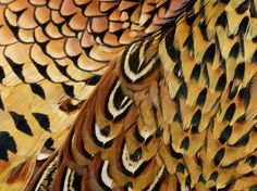 Flight feathers are very strong and stiff feathers found on the wings of birds. Description from martysyard.co.uk. I searched for this on bing.com/images