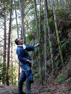 竹虎四代目がゆく!「いつもの焼坂峠にて」 竹林 bamboogrove 竹の風景 bamboolandscape 虎斑竹 tigerbamboo bamboo 虎斑竹専門店 竹虎