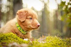 Little lost puppy by ~Rozowynos on deviantART