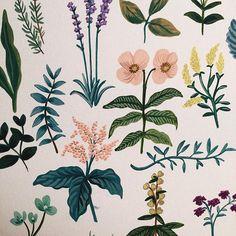 flowers by anna bond.