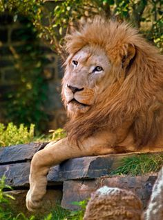 Philadelphia Zoo | ... for lions worldwide by visiting the Philadelphia Zoo's Big Cat Falls
