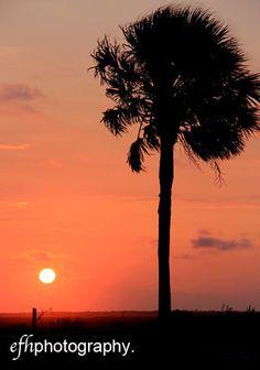 Palmetto Tree Sunset