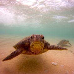 Squirt. #Kauai, #Hawaii, #Flowkane, #Travel