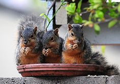 Squirrels - Business Lunch!