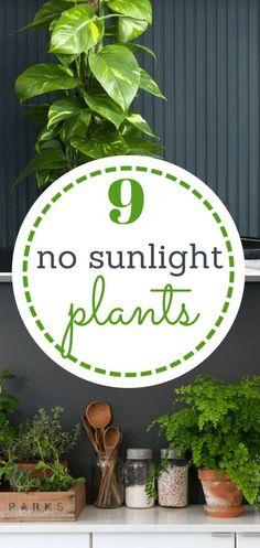 No Sunlight Plants, Indoor Garden, Indoor Gardening, Indoor Plants, Indoor Herb Garden, Gardening, Garden Ideas