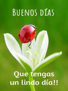 Ladybug on beautiful flower Animals And Pets, Cute Animals, Beautiful Flowers, Beautiful Pictures, Bugs And Insects, Tier Fotos, Belle Photo, Amazing Nature, Beautiful Creatures