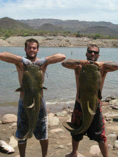 Catfishing or noodlein' as we call it in the south. I wanna go so bad! Carp Fishing Bait, Gone Fishing, Trout Fishing, Kayak Fishing, Brian Lake, Image Of Fish, River Monsters, Fishing Pictures, Boys Like