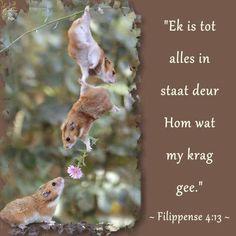 Ek is tot alles in staat Prayer Verses, Scripture Verses, Afrikaans Quotes, Bible Pictures, Prayers, Words, Animals, Faces, Inspirational