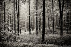 Black & White Photography, Forest Scenery, Germany, Fine Art Print, Trees, Green, Home Decor