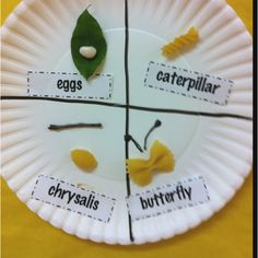 Posting for my preschool teacher friends! Too cute and easy: Life cycle of a butterfly craft