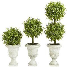 The boxwood has been valued from antiquity for its denseness, fine texture and trainability—all of which make it perfect in your home. Offering three times the style possibilities of single boxwood trees, these faux cultivars require no maintenance and will happily occupy a prominent or supportive position.