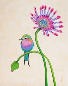 Bird Art Botanical Print Lilac Breasted Roller Bird by SummerHour