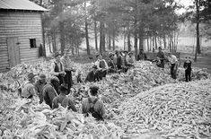 Quilting and Corn-shucking in Alabama in 1936 was often time for a party – Alabama Pioneers
