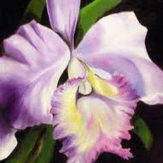 Cattleya orchid! My favorite flower.   tattoos   Pinterest